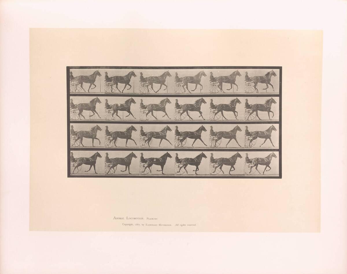 Animal Locomotion : Plates -Vol IX ; Horses ; Plate 613 (Originaltitel) von Muybridge, Eadweard