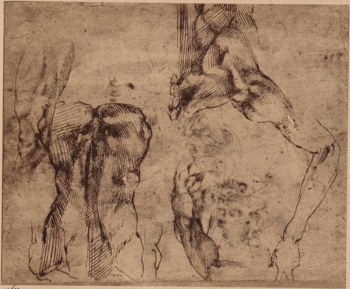 Fotografie einer Federzeichnung mit Rücken- und Arm-Studien, von Michelangelo Buonarroti (vom Bearbeiter vergebener Titel)