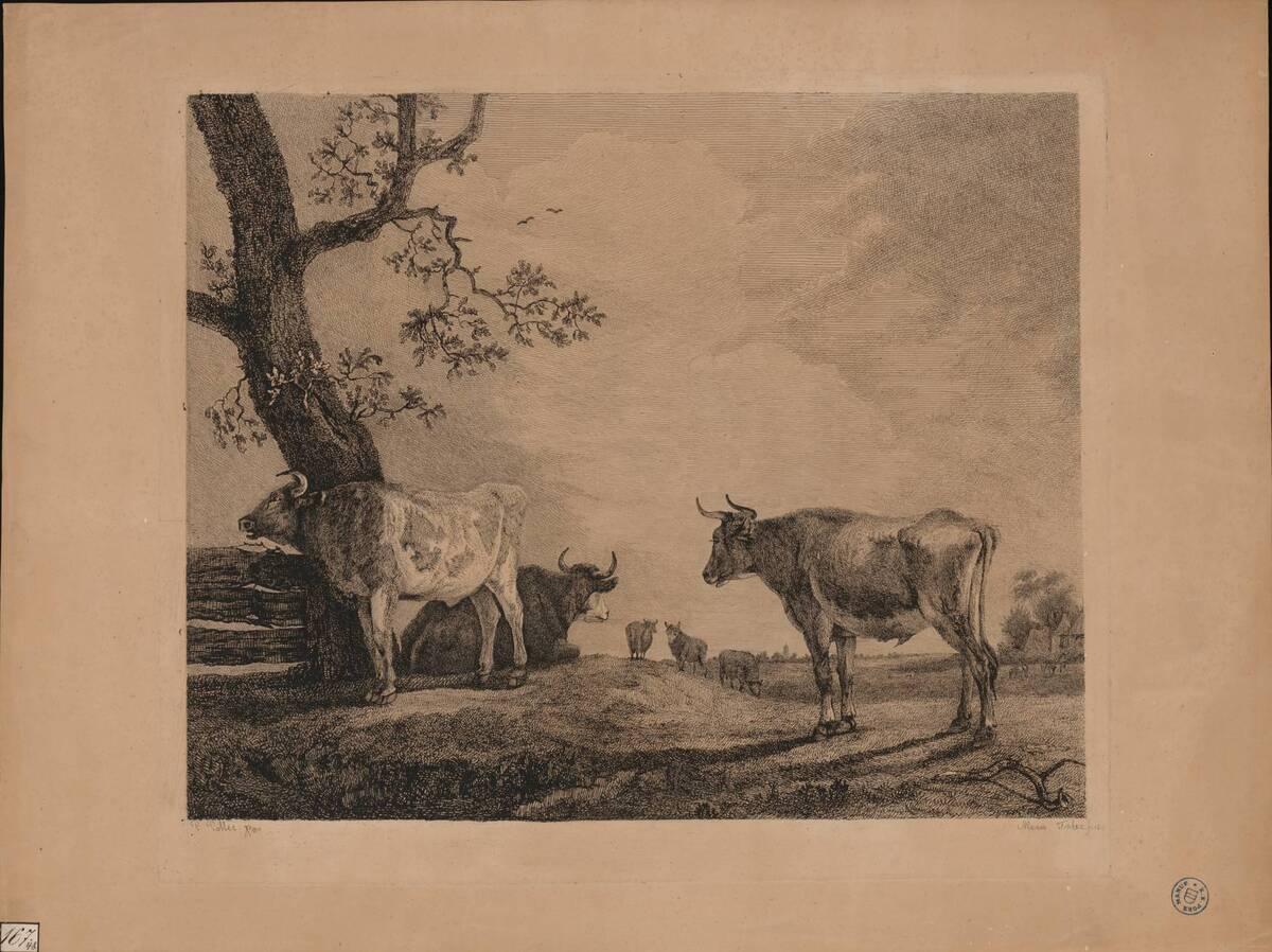 [Kühe] (vom Bearbeiter vergebener Titel) von Potter, Paulus