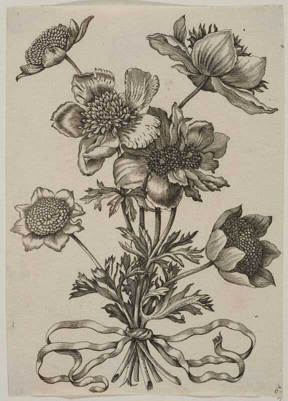 Blumen, Blatt 6 aus einer Folge von Blumendarstellungen (evtl. aus dem Neuen Blumenbuch) von Merian, Maria Sibylla